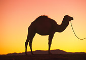 MAM 04 RK0034 20