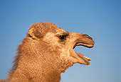 MAM 04 RK0009 04