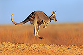 MAM 06 AC0017 01