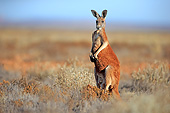 MAM 06 AC0018 01