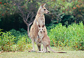 MAM 06 GL0003 01