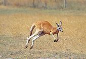 MAM 06 GL0006 01