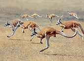MAM 06 GL0008 01