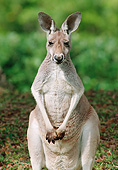 MAM 06 GR0001 01