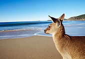MAM 06 MH0004 01