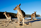 MAM 06 MH0005 01