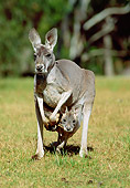MAM 06 MH0012 01
