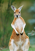 MAM 06 MH0015 01