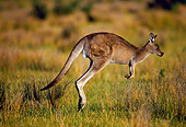 MAM 06 KH0001 01