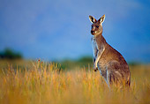 MAM 06 KH0002 01