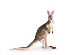 MAM 06 RK0015 01
