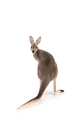 MAM 06 RK0016 01