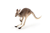 MAM 06 RK0018 01