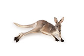 MAM 06 RK0023 01