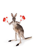 MAM 06 RK0024 01