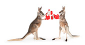 MAM 06 RK0026 01