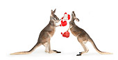 MAM 06 RK0027 01