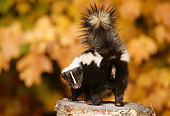 MAM 07 TL0002 01