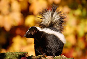 MAM 07 TL0003 01