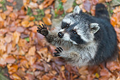 MAM 08 AC0001 01