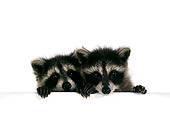 MAM 08 RS0006 05
