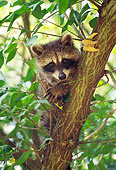 MAM 08 RS0023 01