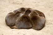 MAM 09 AC0006 01