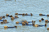 MAM 09 TL0039 01