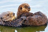MAM 09 TL0044 01