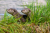 MAM 09 TL0049 01