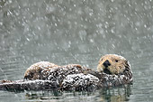 MAM 09 TL0055 01