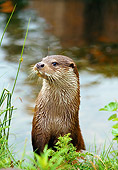 MAM 09 WF0005 01