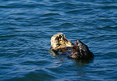 MAM 09 HB0004 01
