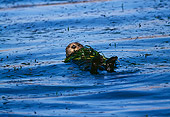 MAM 09 HB0005 01
