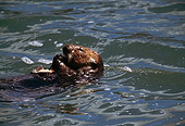 MAM 09 HB0009 01