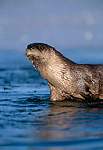 MAM 09 TL0016 01