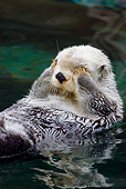 MAM 09 TL0028 01