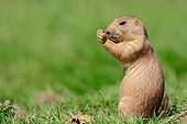MAM 10 AC0005 01