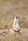 MAM 10 MC0002 01