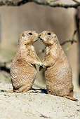 MAM 10 WF0001 01
