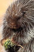 MAM 11 AC0003 01