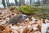 MAM 11 AC0005 01