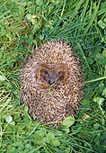 MAM 11 GL0001 01