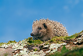 MAM 11 GL0002 01