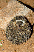 MAM 11 MC0002 01