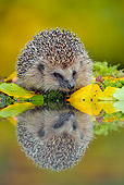 MAM 11 WF0003 01