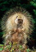 MAM 11 TK0003 01