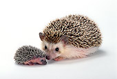 MAM 11 TK0004 01