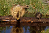 MAM 11 TL0001 01