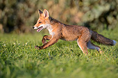 MAM 12 AC0001 01